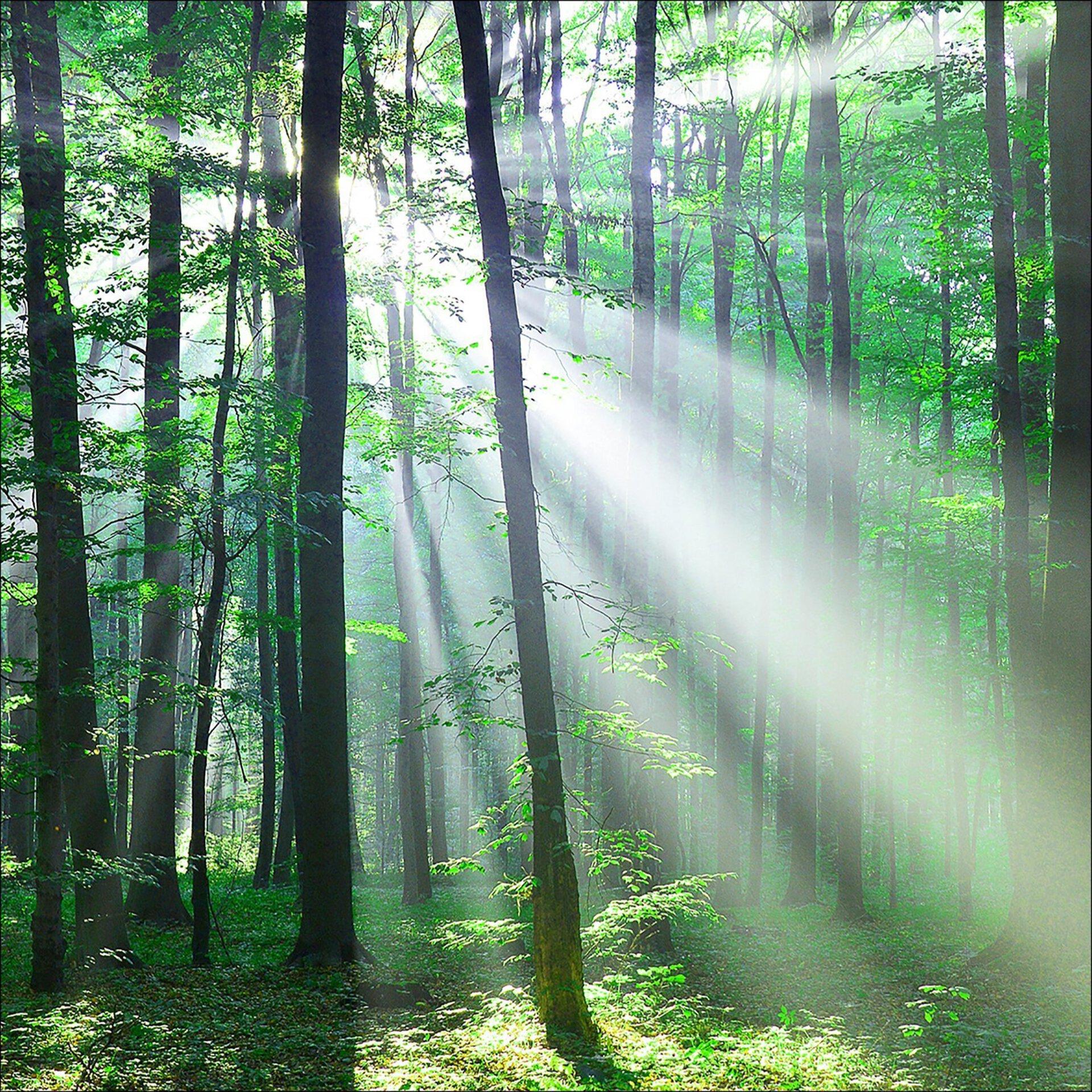 Bild Forest Harmony III Pro-Art Glas 50 x 50 x 1 cm
