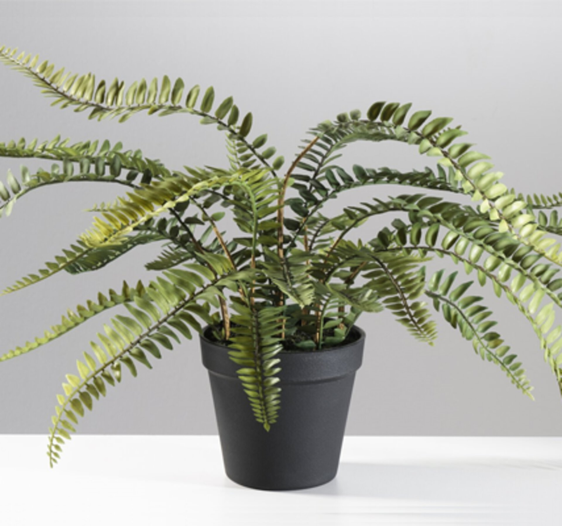 Kunstpflanze in Farn-Optik
