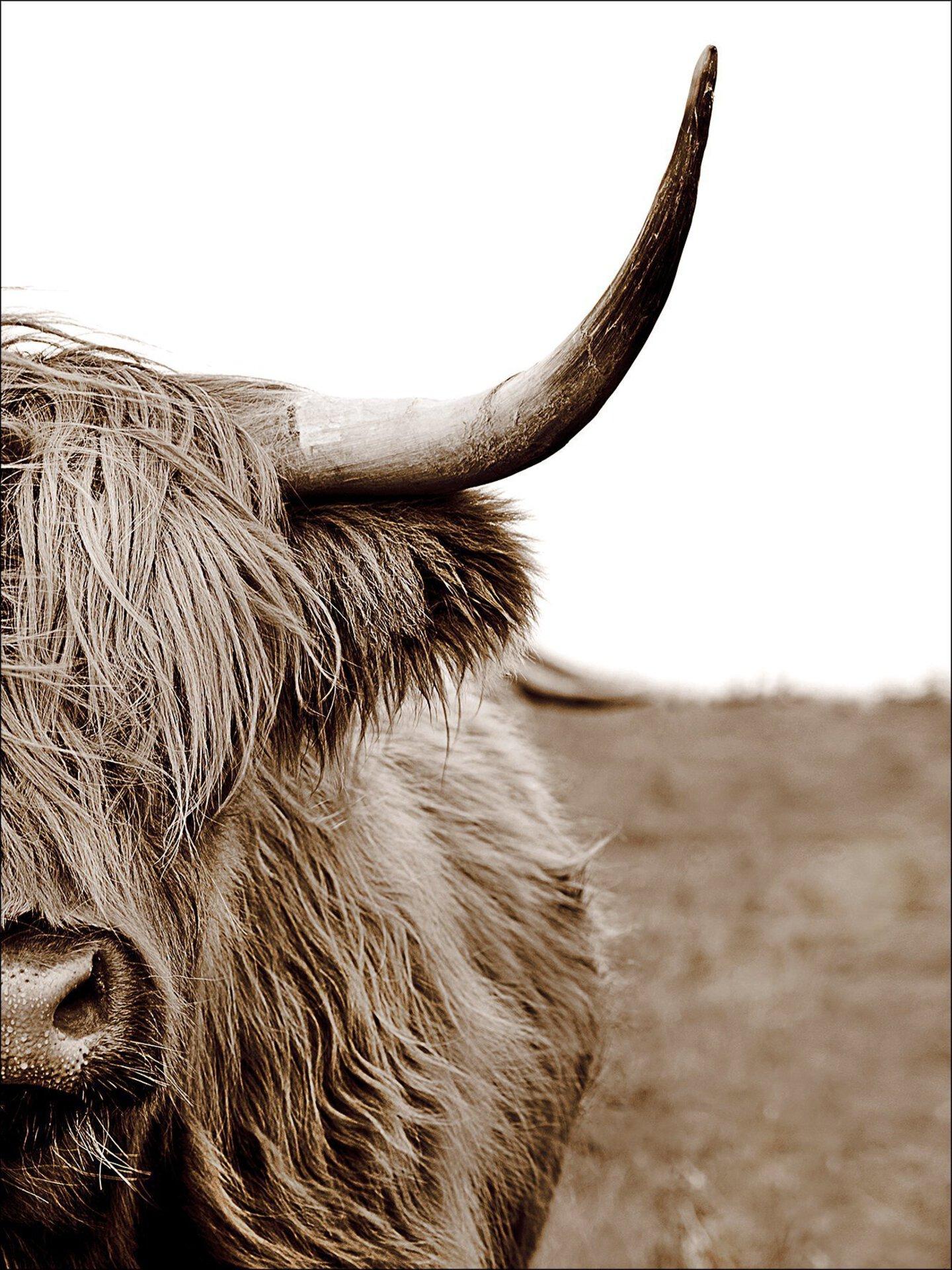 Bild Scott.Highland Cattle ll Pro-Art Holzwerkstoff mehrfarbig 77 x 57 x 2 cm